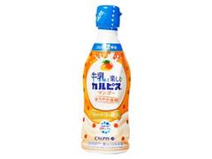 アサヒ 牛乳と楽しむカルピス マンゴー ボトル300ml
